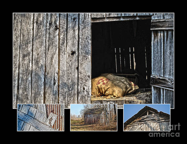 Knot Hole Photograph - Purina Feed Sack In Loft Collage by Greg Jackson
