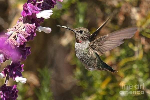 Photograph - Purple Among The Greens by Adam Jewell