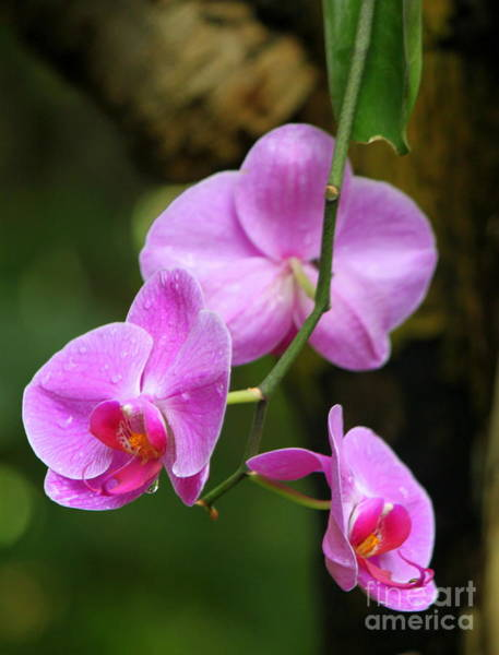 Wall Art - Photograph - Purple And Pink Orchid by Eric Irion