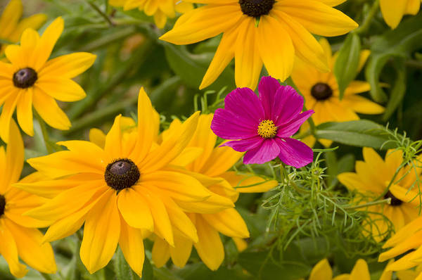 Purple And Yellow Flowers Art Print
