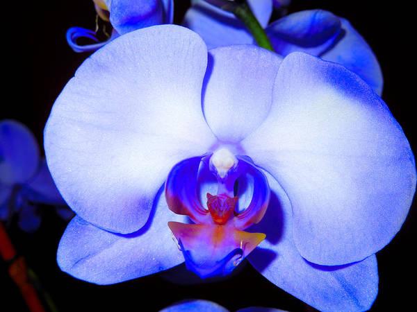 Jennifer Stone Photograph - Purple Anniversary by Jennifer Stone