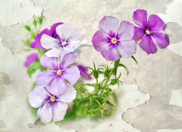 Wall Art - Photograph - Purple Beauties by Cathie Tyler