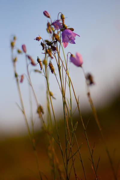 Canon Eos 6d Photograph - Purple Bells by Jakub Sisak
