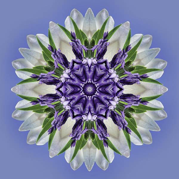 Photograph - Purple Blooms Mandala by Beth Sawickie