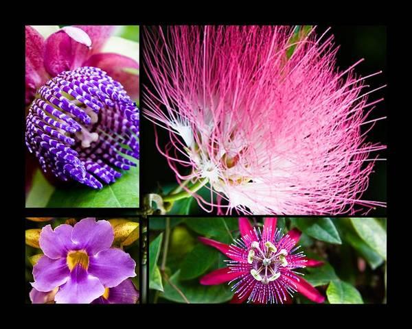 Photograph - Purple Bouquet by Melinda Ledsome
