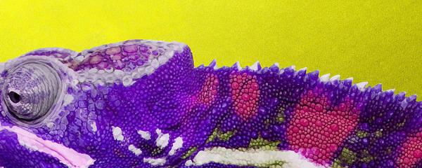 Digital Art - Purple Chameleon On Yellow by Serge Averbukh
