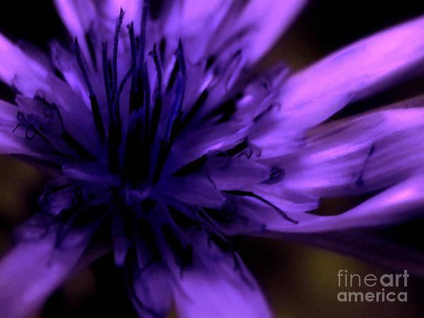 Wild Grape Photograph - Purple Dance by Molly McPherson