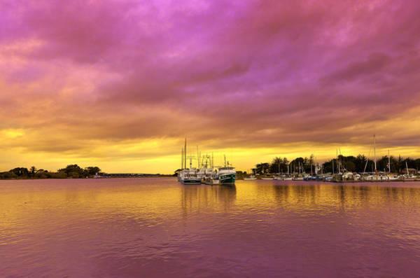 Photograph - Purple Daze by Jon Exley