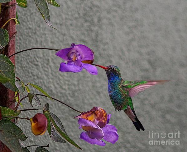 Photograph - Purple Delight by John  Kolenberg