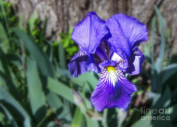 Photograph - Purple Delight by Michael Waters