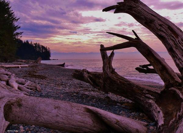 Photograph - Purple Dreams In Bc by Barbara St Jean
