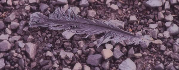 Simple Life Mixed Media - Purple Feather by Dan Sproul