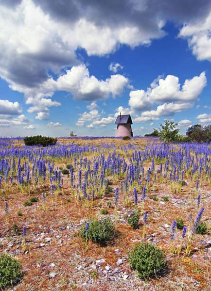 Purple Flower Countryside Art Print