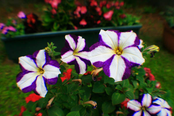 Photograph - Purple Flower by Doc Braham