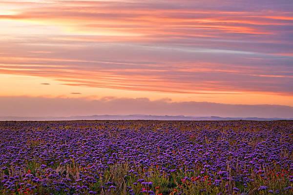 Photograph - Purple Flowered Majesty by Rick Wicker