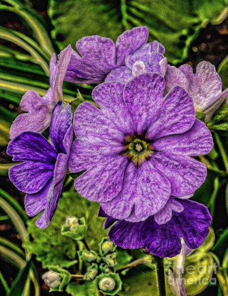 Wall Art - Photograph - Purple Flowers by Nick Zelinsky