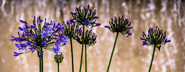 Photograph - Purple Flowers by Sotiris Filippou