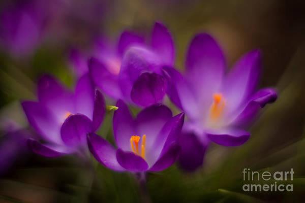 Dof Photograph - Purple Garden Flourish by Mike Reid