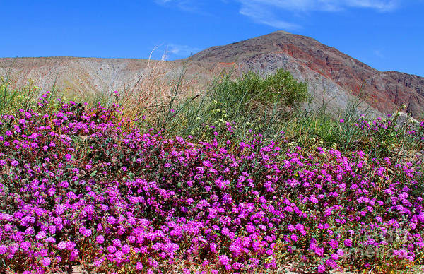 Photograph - Purple Glory In The Desert By Diana Sainz by Diana Raquel Sainz