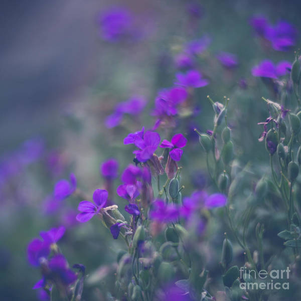 Photograph - Purple Goodness by Carrie Cole
