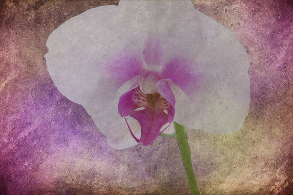 Photograph - Purple Haze by Judy Hall-Folde