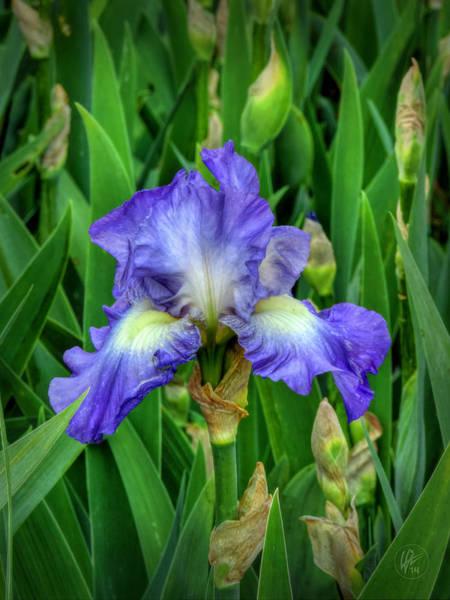 Photograph - Purple Iris 001 by Lance Vaughn