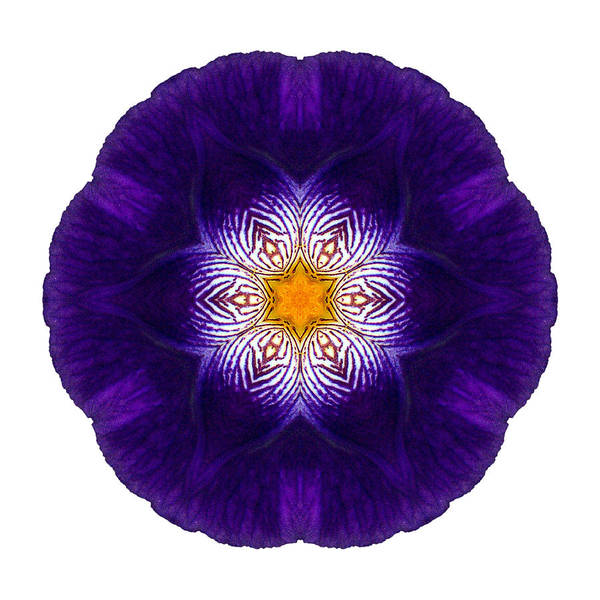 Photograph - Purple Iris II Flower Mandala White by David J Bookbinder