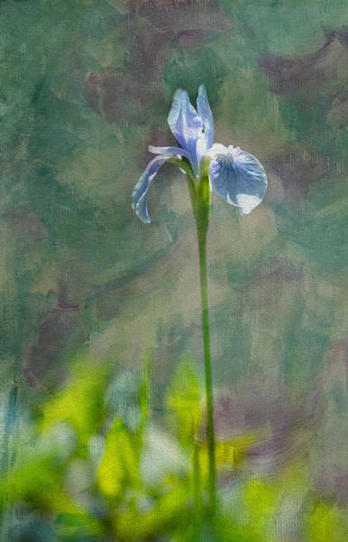 Oil Paint Photograph - Purple Iris by Rebecca Cozart