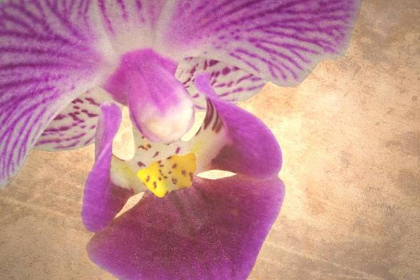 Photograph - Purple Orchid 1 by Rudy Umans