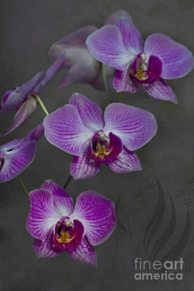 Photograph - Purple Orchid Flower by Heiko Koehrer-Wagner