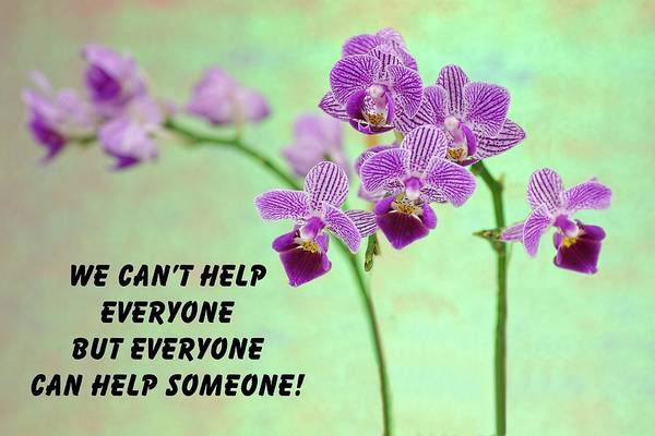 Photograph - Purple Orchid Quote-1 by Rudy Umans