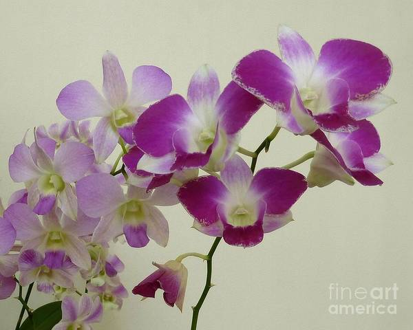Photograph - Purple Orchids by Patricia Strand