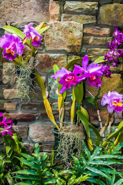Photograph - Purple Orchids With Cultured Stone Background by Alex Grichenko