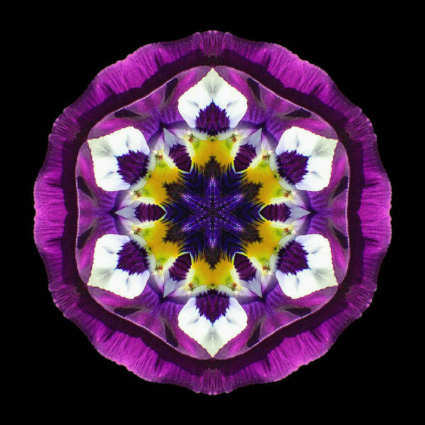 Photograph - Purple Pansy II Flower Mandala by David J Bookbinder