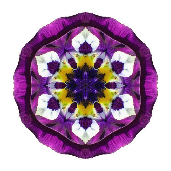 Photograph - Purple Pansy II Flower Mandala White by David J Bookbinder