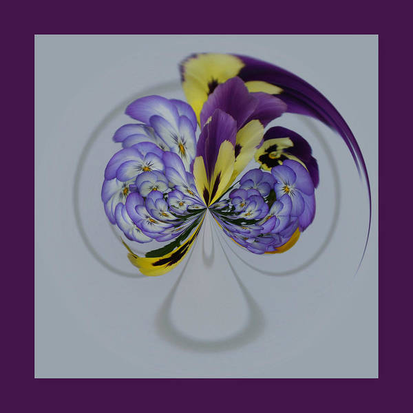 Photograph - Purple Pansy Plume by Jim Baker