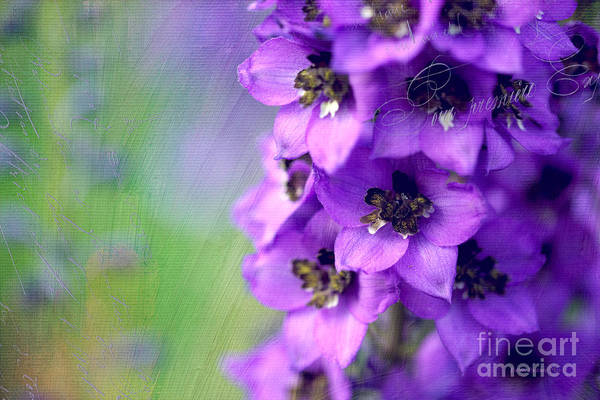 Photograph - Purple Passion by Beve Brown-Clark Photography