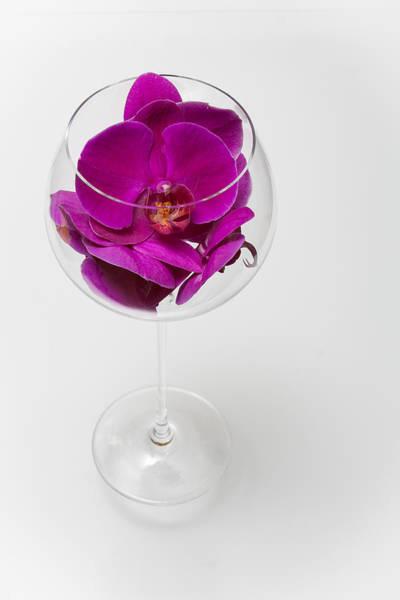 Wall Art - Photograph - Purple Phalenopsis In A Glass  79 by W Chris Fooshee