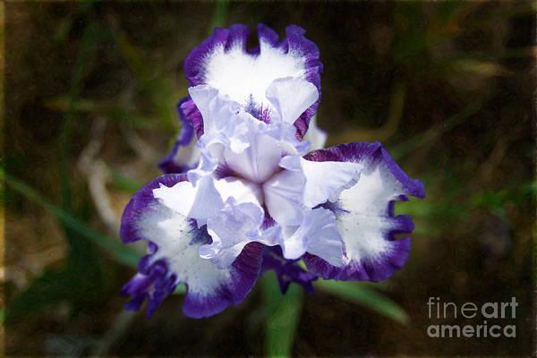 Photograph - Purple Pucker Abstract Garden Art By Omaste Witkowski by Omaste Witkowski