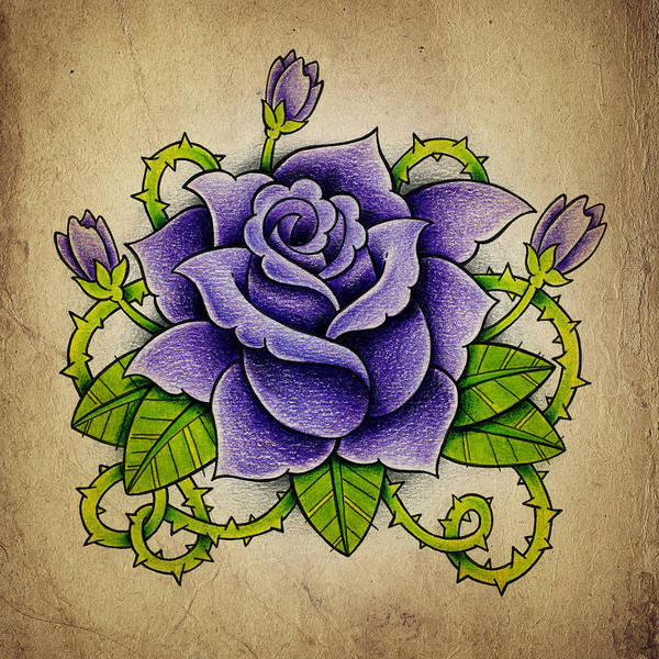 Pencil Drawing Photograph - Purple Rose by Samuel Whitton