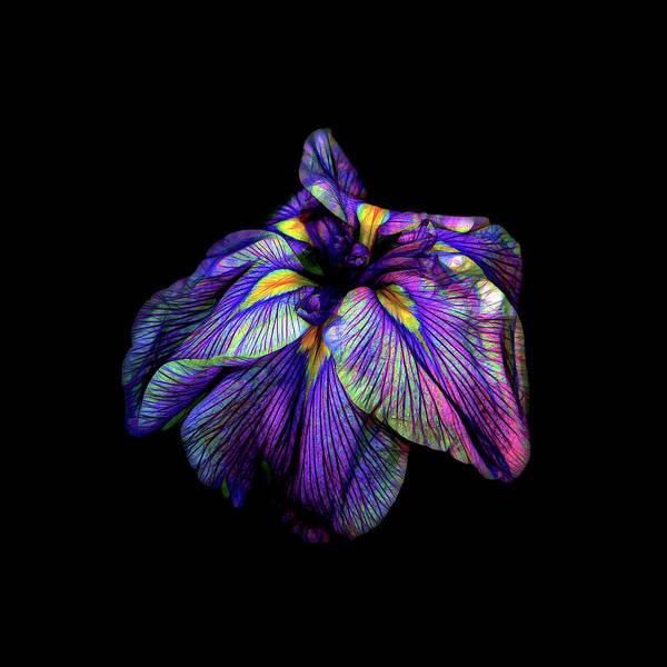 Photograph - Purple Siberian Iris Neon Abstract by David Gn Photography