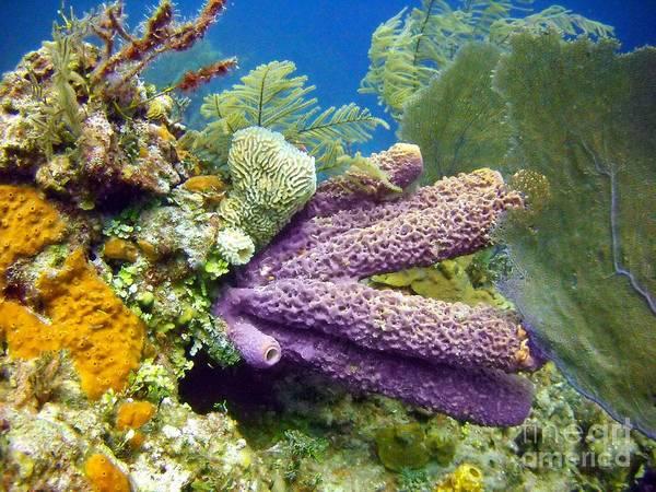 Reef Diving Digital Art - Purple Sponge by Dave DiFiore