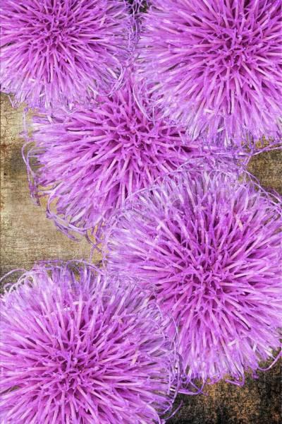 Purple Thistle - 2 Art Print