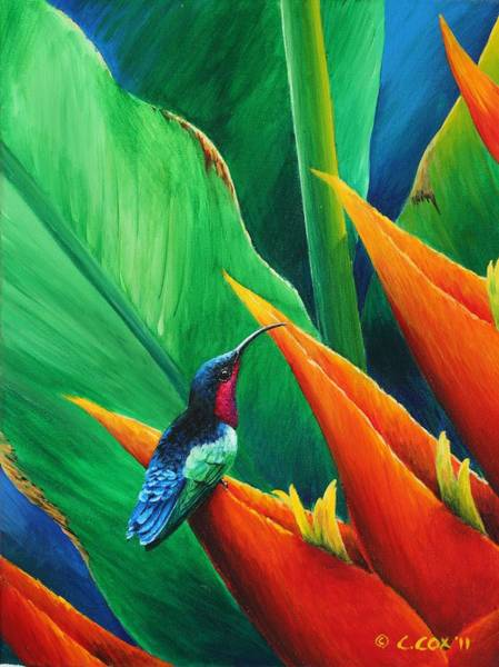 Painting - Purple-throated Carib And Heliconia by Christopher Cox