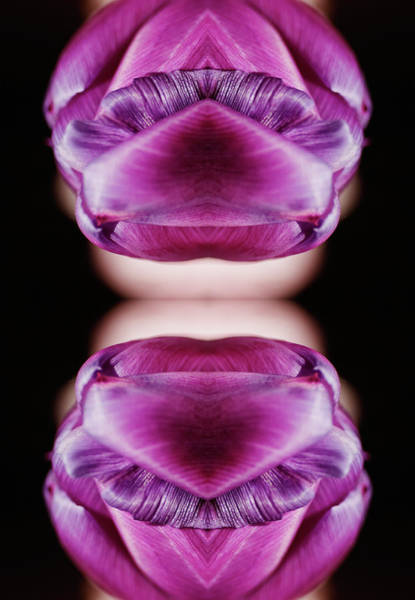 Vertical Abstract Photograph - Purple Tulip Blossom by Silvia Otte