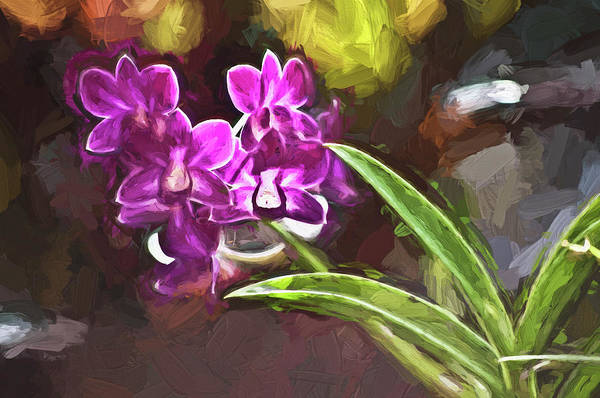Wall Art - Photograph - Purple Vanda Orchid  Honolulu, Oahu by Joe Carini