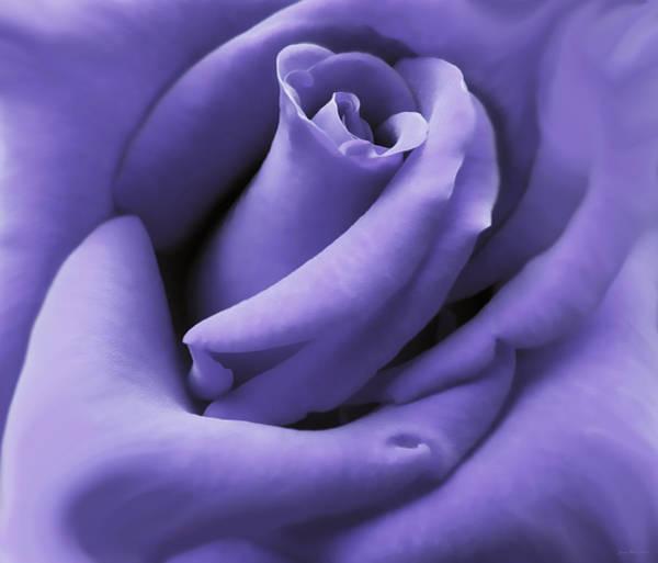 Lavender Photograph - Purple Velvet Rose Flower by Jennie Marie Schell