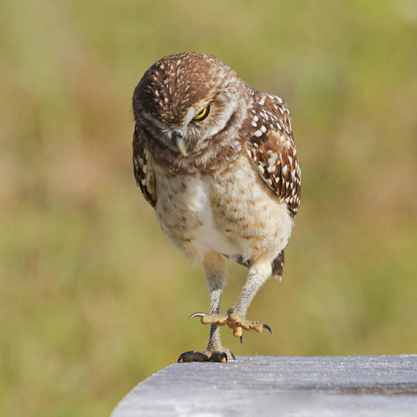Bird Watching Photograph - Put Your Best Foot Forward by Kim Hojnacki