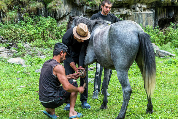Farrier Photograph - Putting New Shoe On Horse In Camp by Rick Saez