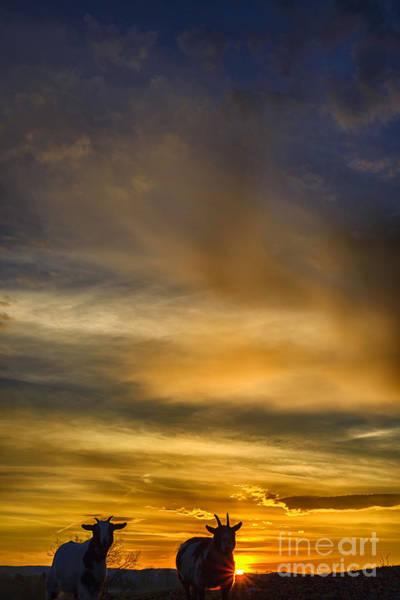 Photograph - Pygmy Sunrise by Thomas R Fletcher